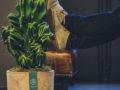 Cereus full screen