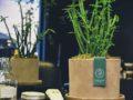 Euphorbia full screen