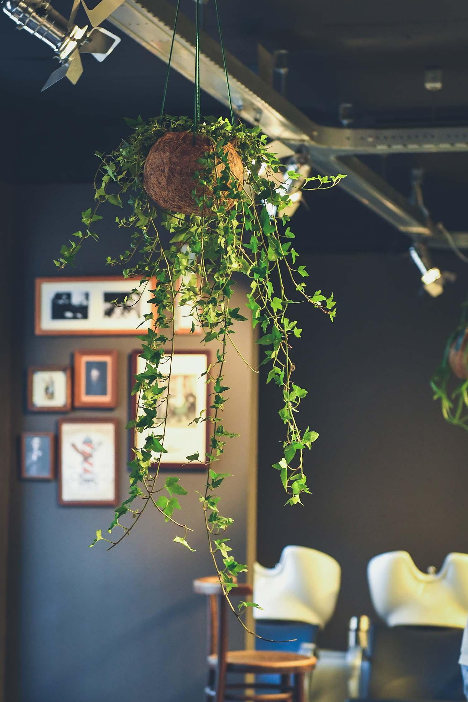 Plant Atelier's Hedera bij kapperszaak Seton