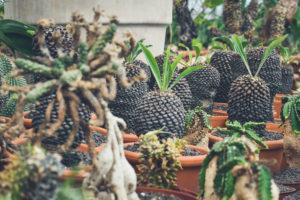 Bolle plantjes gespot door Plant Atelier