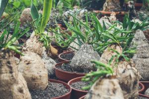 Kas met exotische planten gespot door Plant Atelier