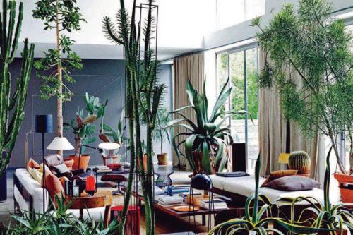 Cactus interieur inspiratie