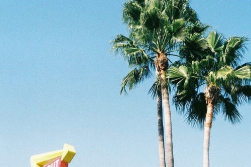 L.A. palmtrees