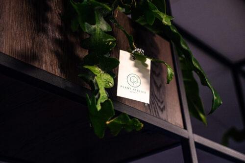 Dag oud & nieuw kater, hallo nieuwe groene planten